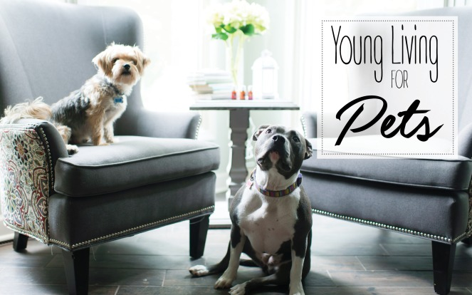 YL for Pets